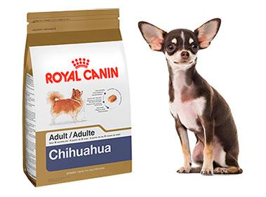 Tout sur la croquette Royal Canin Breed pour chihuahua